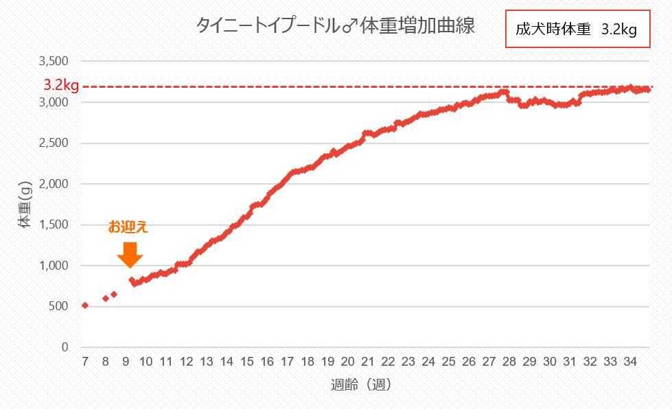 タイニートイプードル体重増加曲線_グラフ