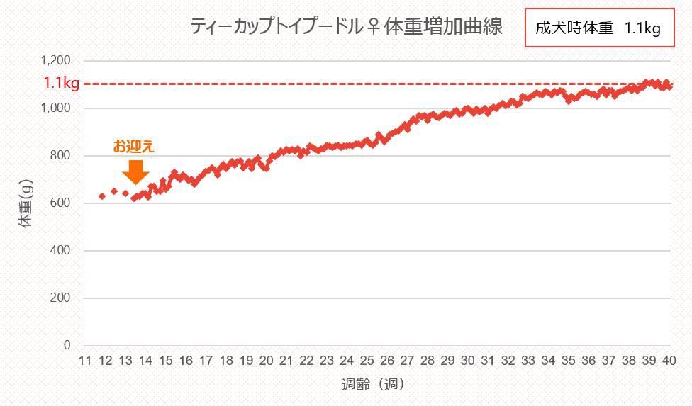 マイクロティーカップトイプードル体重増加曲線_グラフ